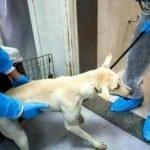 """Lega: """"Interrogazione parlamentare contro l'abbattimento di 25mila cani in Pakistan""""."""